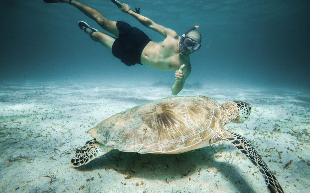Must go to Palawan: Turtle Encounters celebrates Conservation